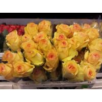 Роза Дэжавю(чайно-гибридная)